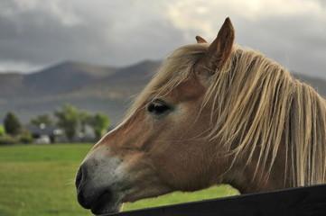 Horses graze on the lawn in Ireland.