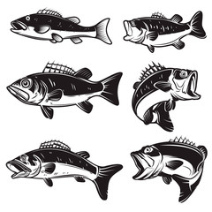 Set of Illustrations of the bass, perch fish isolated on white background. Design element for logo, label, badge, sign. Vector illustration