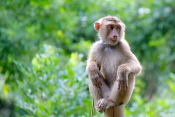 Foto op Textielframe Aap Portrait of macaque monkey