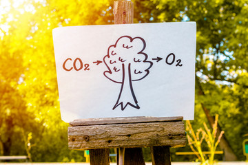 Conversion of Carbon Dioxide by Trees to Oxygen