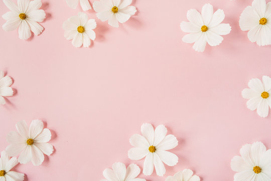 Minimal styled concept. White daisy chamomile flowers on pale pink background. Creative lifestyle, summer, spring concept. Copy space, flat lay, top view.