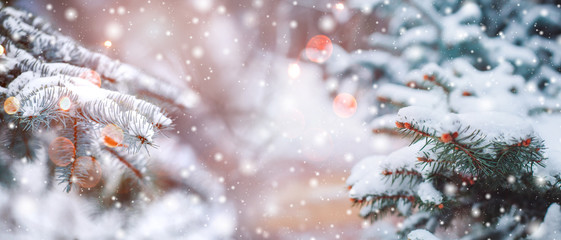 Frosty winter landscape in snowy forest. Christmas background with fir trees and blurred background...
