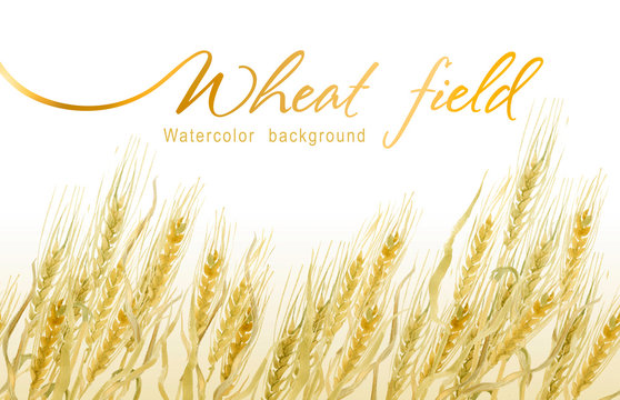 Field of gold wheat. Seamless watercolor background.