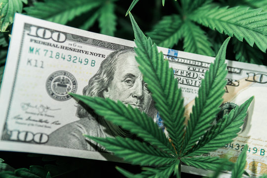 Money and pot. Cannabis finance. Revenues in the marijuana industry and the medical industry. American dollar bill on cannabis leaves. Taxation and marijuana. The economy of hemp industry.