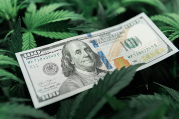 Tax on weed. Money and pot. Cannabis finance. Revenues in the marijuana industry and the medical industry. American dollar bill on cannabis leaves. Taxation and marijuana.