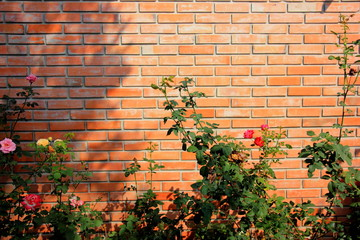 grow, outside, house, building, fairy, concrete, cottage, walls, gardening, closeup, blooming,...