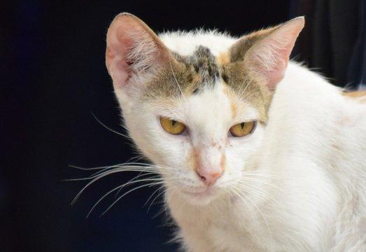 Gesicht einer Strassenkatze