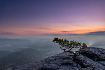 Kiefer auf dem Lilienstein im Elbsandsteingebirge zum Sonnenaufgang