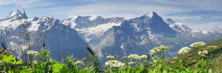 Alpine peaks of Grindelwald and Jungfrau. Landskape background of Bernese highland. Alps, tourism, journey, hiking concept. Wall mural