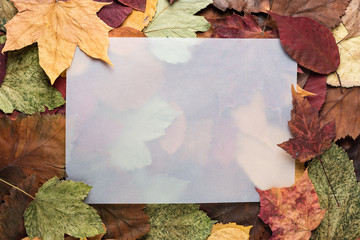 Background of dry autumn colorful leaves with empty space