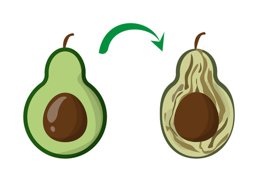 Rotten vegetable avocado vector isolated. Food waste