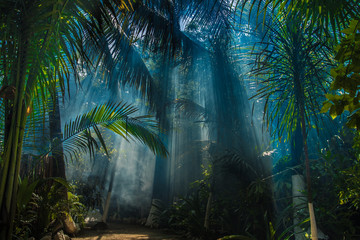 Morning light in beautiful jungle garden
