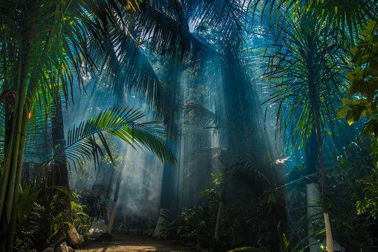Morning light in beautiful jungle garden