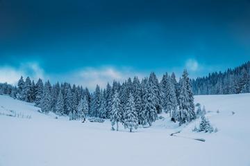 Foto op Plexiglas Blauwe jeans Majestic winter landscape with snowy fir trees. Winter postcard.