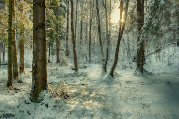 first snow in a forest on a sunny day after a snowfall. backlight
