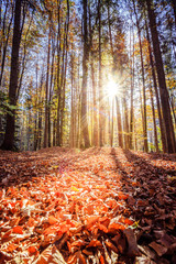 Forest landscape in autumn: Colorful leaves and positive atmosphere
