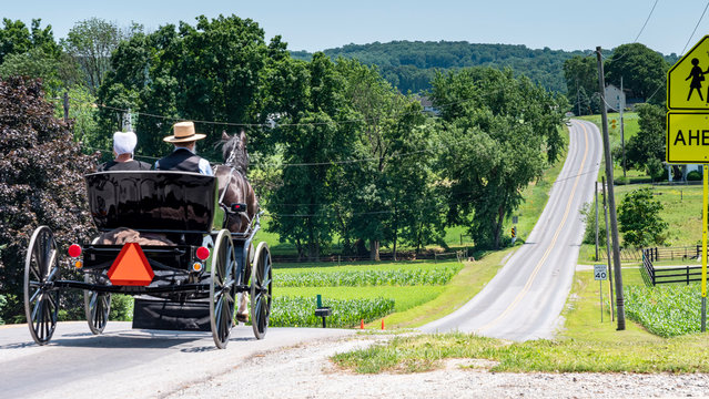 Amish Open Horse and Buggy with 2 Amish Adults in it trotting down the Hill on a Sunny Day