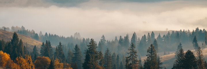 Foto op Aluminium Herfst Wide panorama of beautiful autumn foggy mountain hills with spruce forest at early morning at sunrise.
