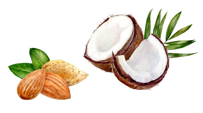 Almond coconut set composition watercolor isolated on white background