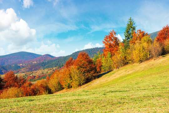 beautiful countryside of carpathian mountain. sunny weather with fluffy clouds on the sky. amazing vivid nature scenery with trees in colorful foliage on rolling hills of rural area