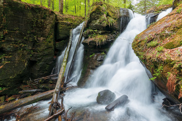 waterfall Voievodyn of ukrainian carpathians. powerful water stream of smooth polonyna. fallen beech trees in the pool. wonderful nature scenery in springtime