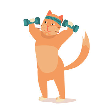 athletic cat trains in sport. fit cat in gym pumps muscles, lifts dumbbells. Exercising in fitness, losing weight. illustration before , after vector