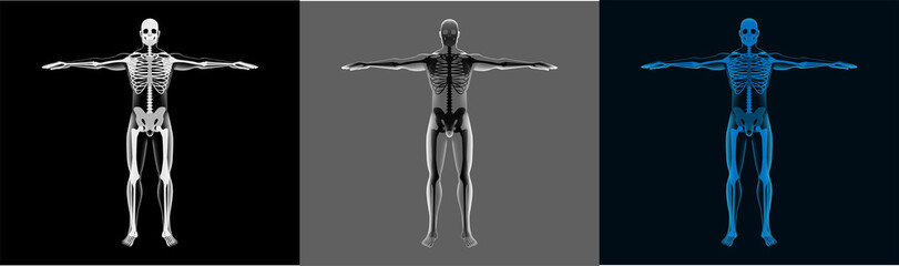 X-Ray Human Body Set. A transparent body with a skeleton is perfect for demonstration. Healthcare 3d men mri screen. Different selection of colors. Vector model in futuristic style, body and skeleton