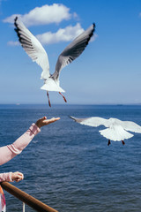 Feeding the seagulls on the Baltic sea coastline during autumn and spring season.