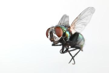 Fly Fotomurales