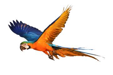 Fond de hotte en verre imprimé Perroquets Colorful flying parrot isolated on white