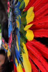 Fotobehang Paradijsvogel Penacho