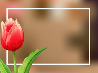 Border template with tulip flower