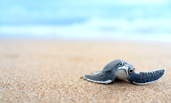 Little turtle on a white beach