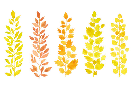 Collection set of hand drawn watercolor leaves isolated on white background for card and design purpose