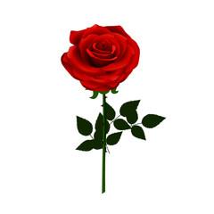 Cute Red Rose Flower - Cartoon Vector Image
