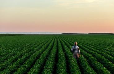 Senior farmer standing in soybean field examining crop at sunset. Fotoväggar