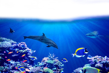 Wall Mural - Background of coral reef  with Tropical marine fish, dolphin and whale shark and surface with white isolated background