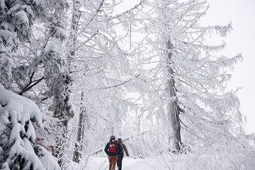 Fototapete - Couple hiking through a snow covered forest in wintertime