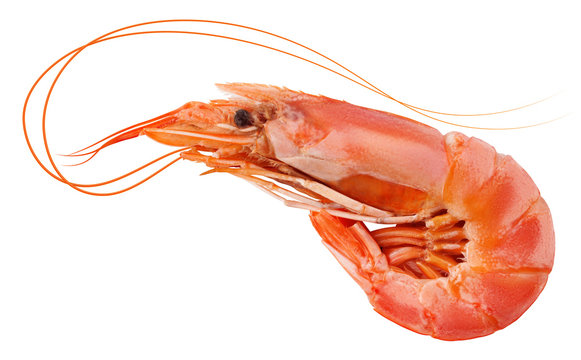 shrimp isolated on white background, clipping path, full depth of field