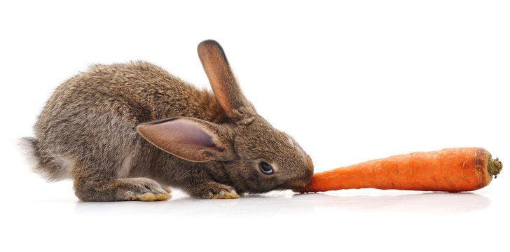 Rabbit and carrot.