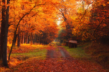 Printed roller blinds Magenta Autumn forest road with logs on side and warm sun shining through golden foliage.