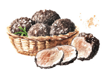 Basket with Black truffle mushrooms. Watercolor hand drawn illustration isolated on white background