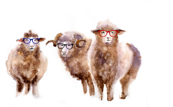 Cute watercolor sheep on the white background with glasses
