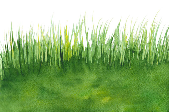 Abstract green like grass watercolor textured background on a white isolated background