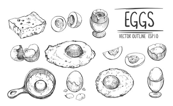 Eggs sketches.  Hand drawn illustration converted to vector