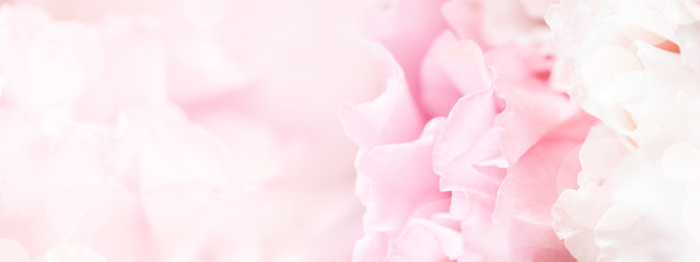 Poster Roses Banner for website with closeup view of pink eustoma flower. Soft pastel wedding background.