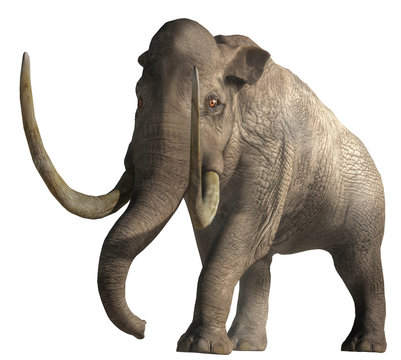 The Columbian Mammoth is an extinct animal that inhabited warmer regions of North America during the Pleistocene. Depicted on a white background. 3D rendering