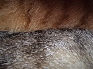 Cat Fur Texture Wall mural