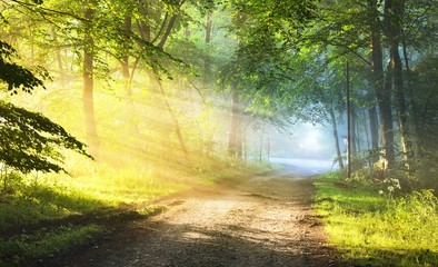 Pathway (gravel road) in a majestic green deciduous forest. Morning fog. Tree silhouettes close-up. Atmospheric dreamlike summer landscape. Sun rays, soft light. Nature, ecology, fantasy, fairytale