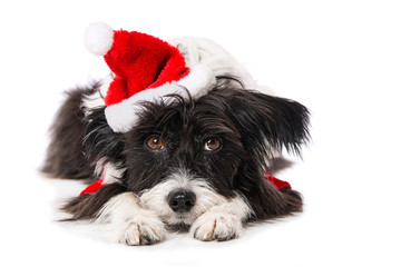 Cute little dog with santa hat lying isolated on white and looking to the camera